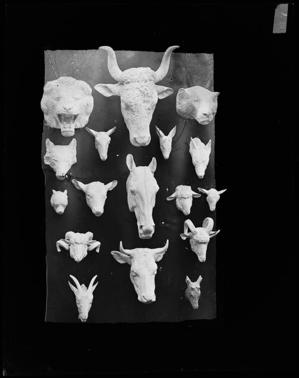 Glasnegatief van foto van producten uit de Cuypers' Kunstwerkplaatsen: 17 verschillende beestenkoppen