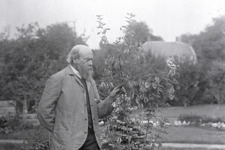 Pierre Cuypers wandelend in de tuin